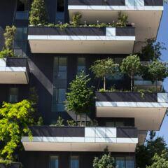 Welche Bäume eignen sich für den Balkon?
