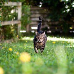 Katze aus dem Garten vertreiben und loswerden – schonende Methoden