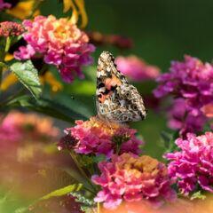 Gartenarbeiten im Juli – anpflanzen, pflegen, ernten