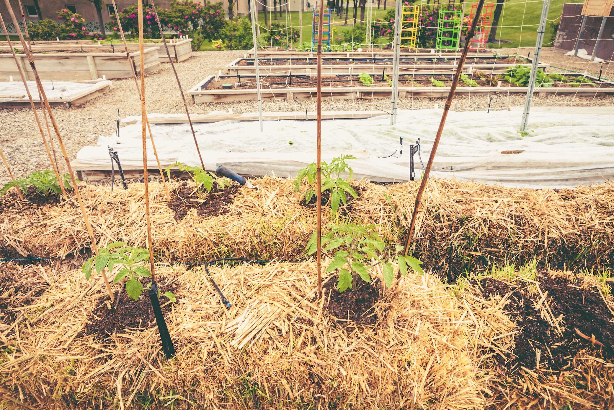 Gärtnern auf Stroh Wie Pflanzen auf Strohballen gedeihen