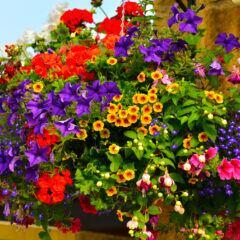 Pflanzen-Trend Millefleurs für Garten und Balkon