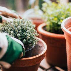 Häufige Fehler die beim Düngen von Kübelpflanzen passieren