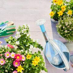 MIt wenig Geld und kleinem Budget den Garten gestalten