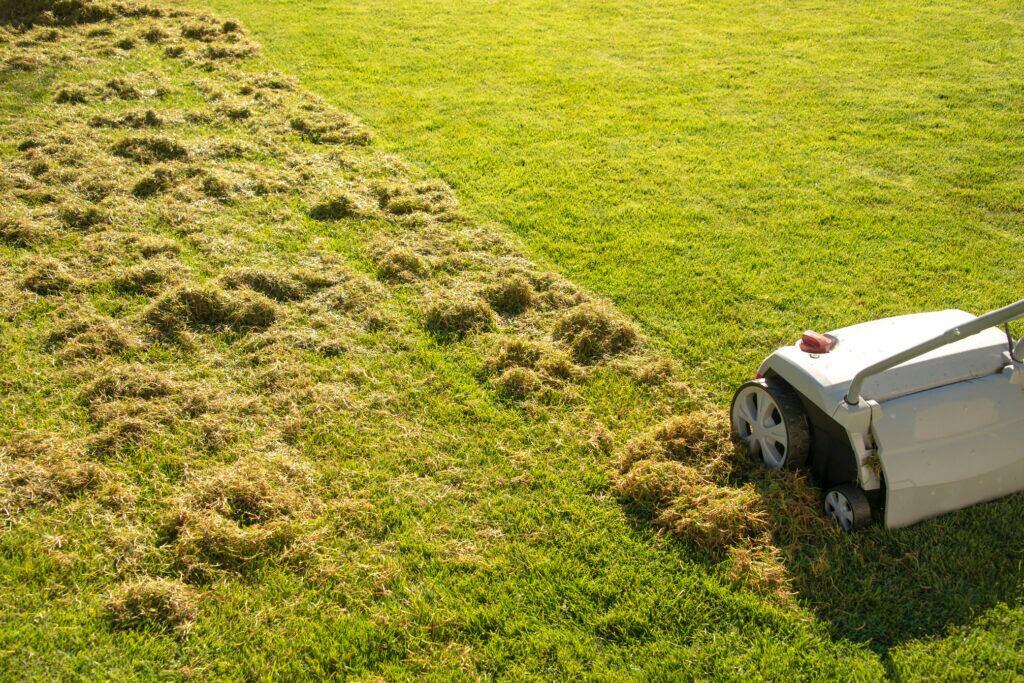 5 effektive Methoden gegen Moos im Rasen
