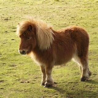Darf man ein Pony oder Pferd im Garten halten?