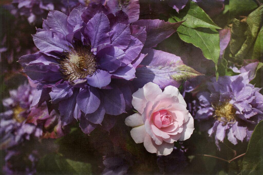 10 perfekte Rosenbegleiter