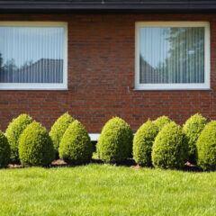 Gleiche Bäume und Sträucher besser nicht in eine Reihe pflanzen
