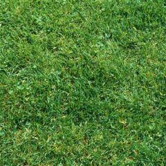 Mähen, pflegen, düngen: Rasen-Mythen im Check