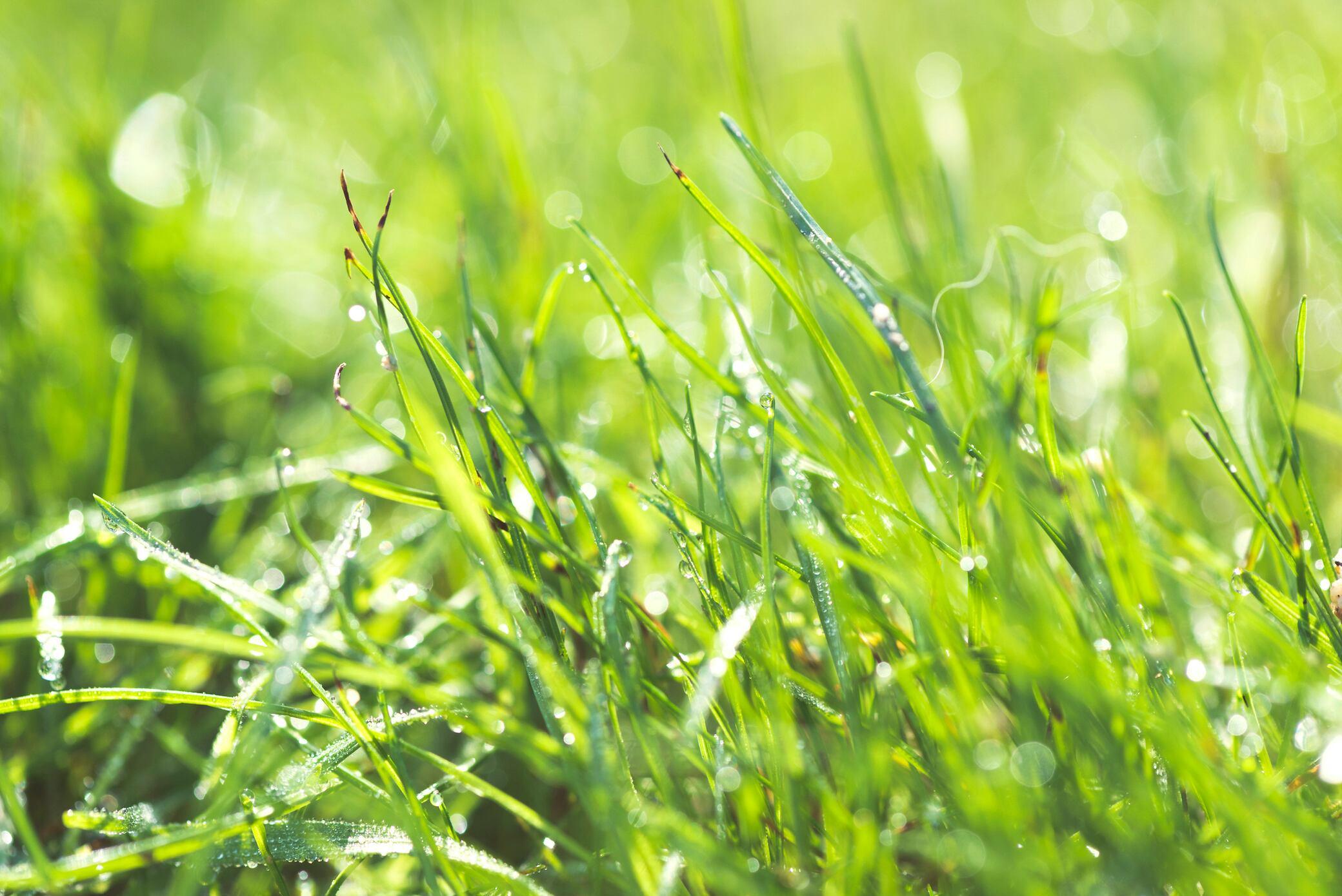 Rasen anlegen – so klappt es mit einem üppigen Grün