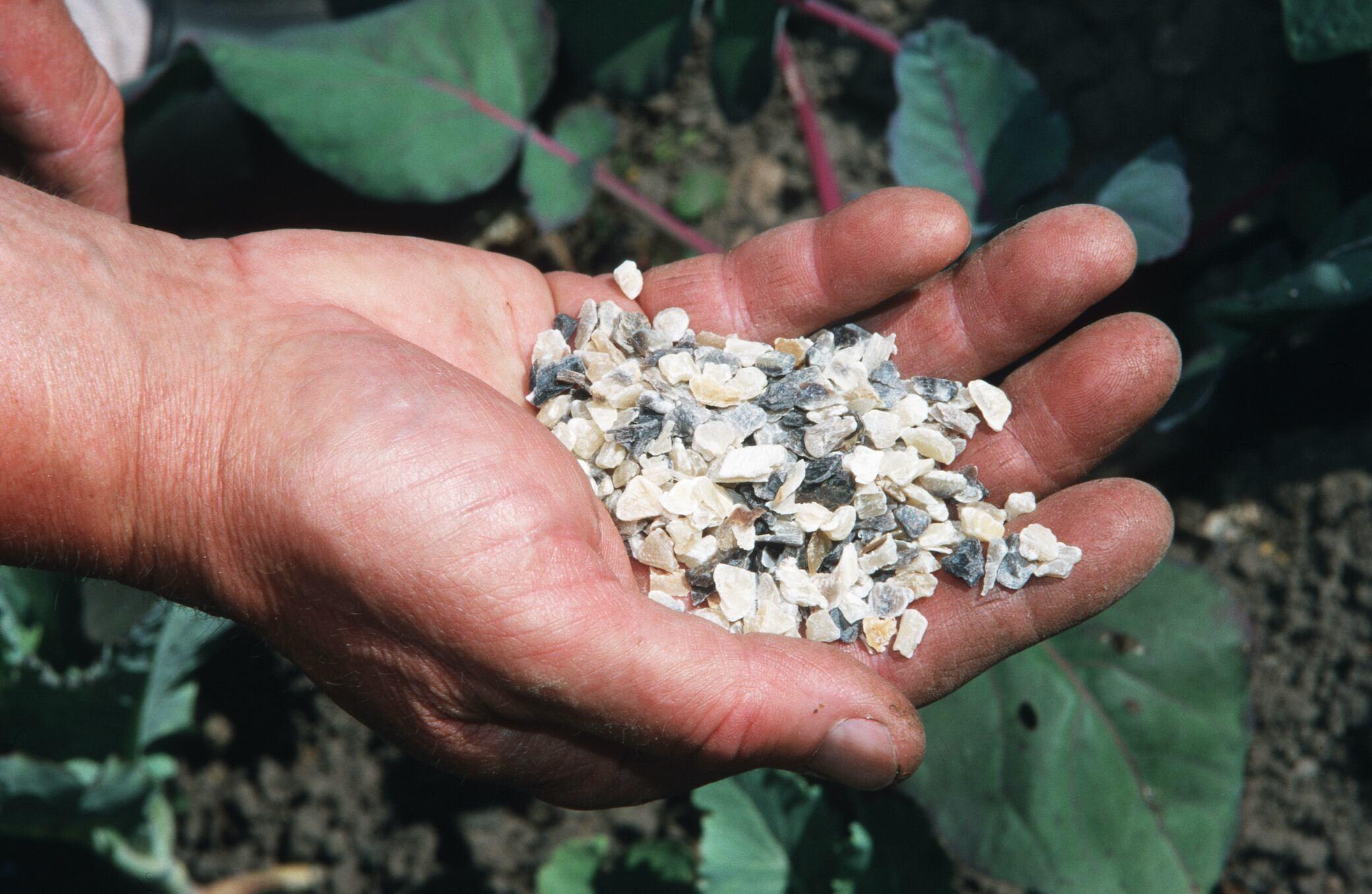Hornspäne – die nachhaltigere Alternative zu Mineraldünger?