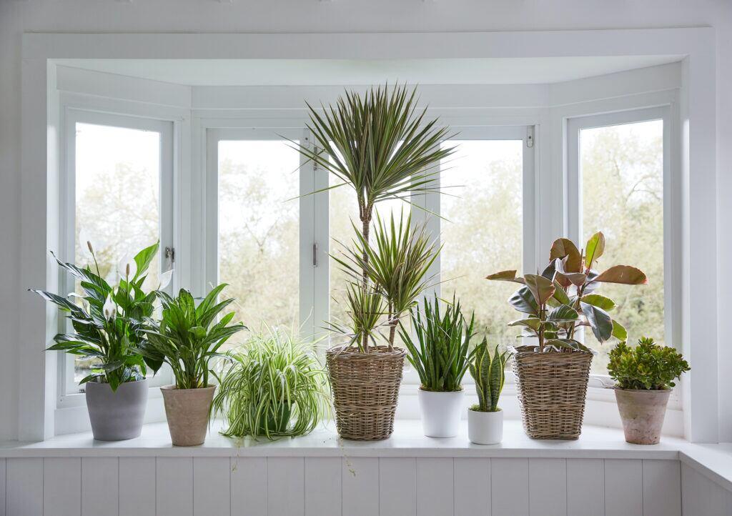6 Pflanzen, die für Abkühlung in der Wohnung sorgen