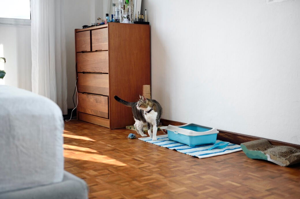 Katze in Wohnung mit Katzenklo