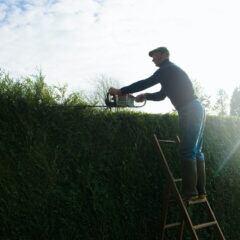 Wie hoch darf die Hecke im Garten sein?