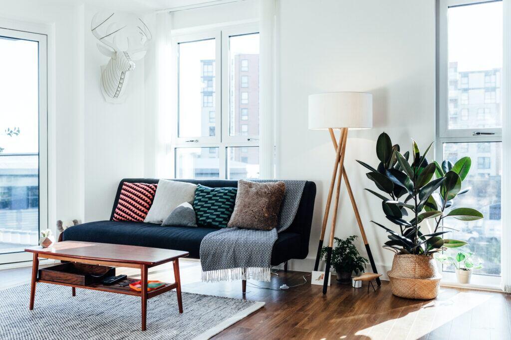 Gummibaum im Wohnzimmer neben Sofa, Tisch und Fenster