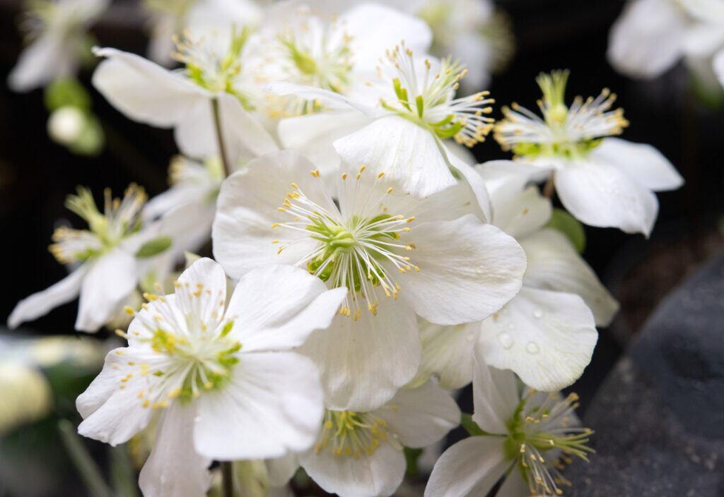 Pflanzen Die Im Winter Blühen