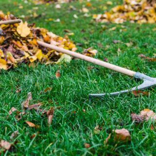 Laubhaufen liegen auf Rasen