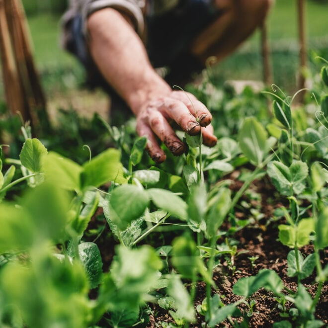 Wie geht biologisches Gärtnern?