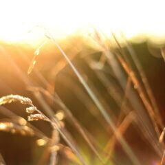 Was der Altweibersommer für Garten und Pflanzen bedeutet