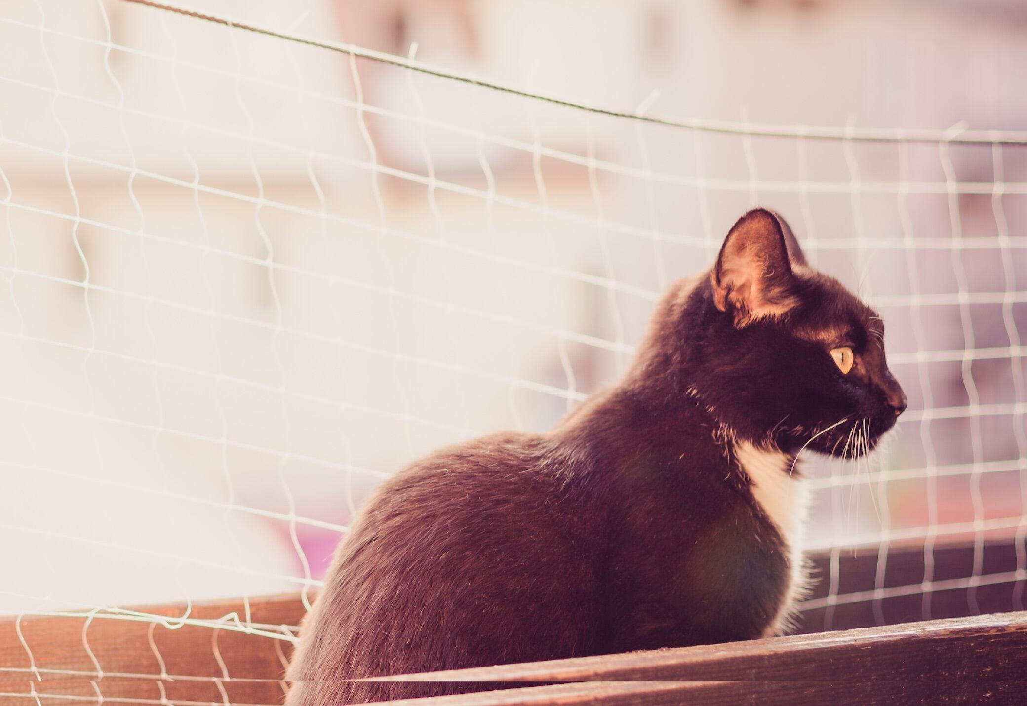 Urteil: Katzennetz darf vom Mieter angebracht werden - myHOMEBOOK