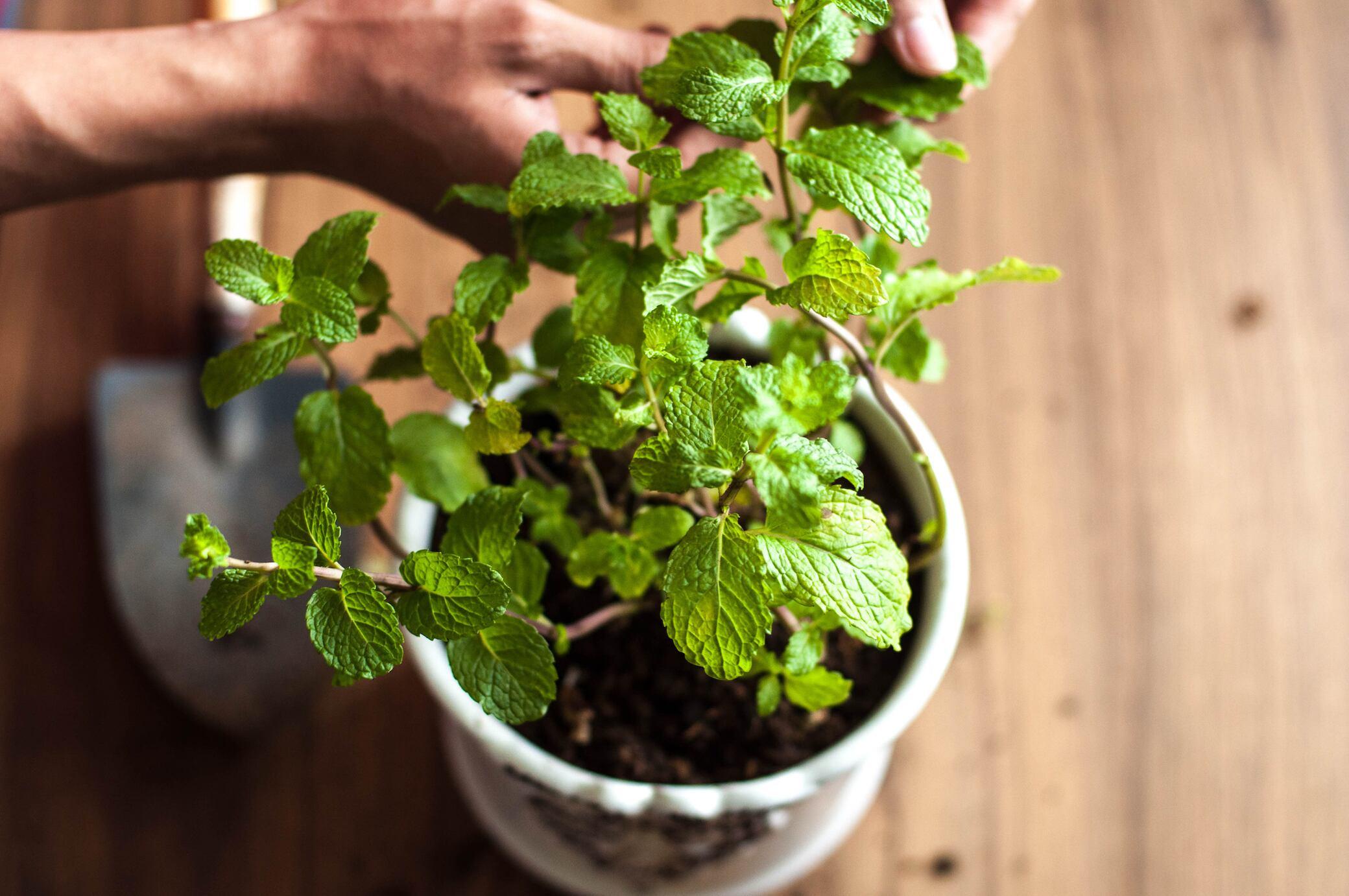 9 Anzeichen, dass man seine Pflanze umtopfen sollte