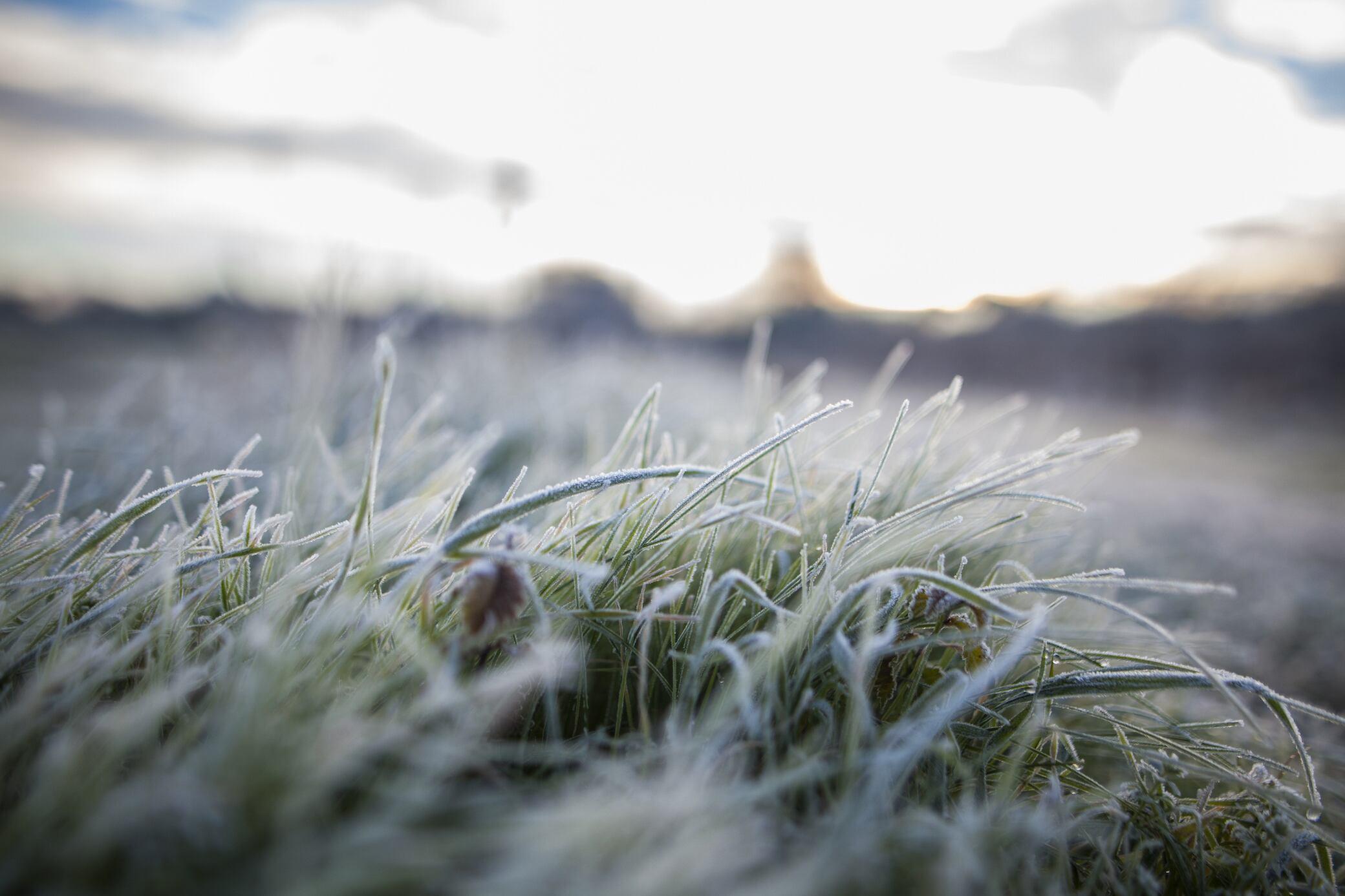 Pflege, die der Rasen nach dem Winter braucht